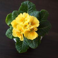 Hotel Boomgaard flower